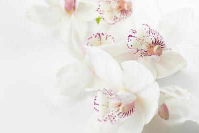 organic perfume ingredients