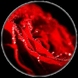 rose perfume splash of scent